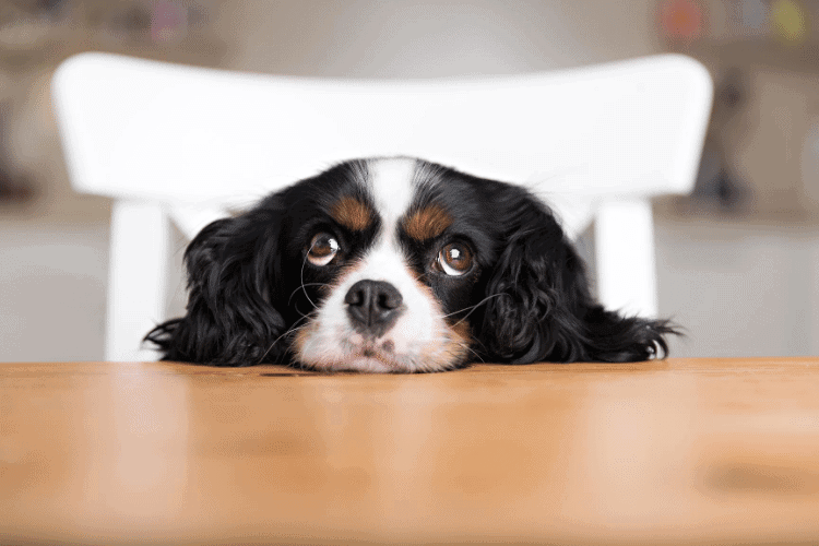 image of dog waiting for table scraps